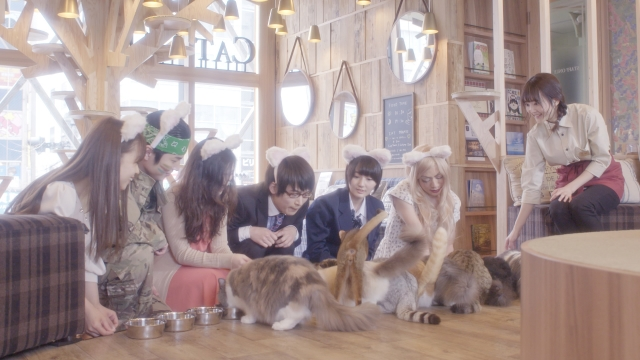 (c)2018 The Cat Café Partners